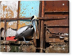 The Eavesdropper Acrylic Print by James Brunker