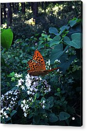 The Elf Acrylic Print by Lucy D