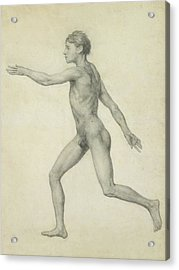The Entire Human Figure From The Left Lateral View Acrylic Print by George Stubbs