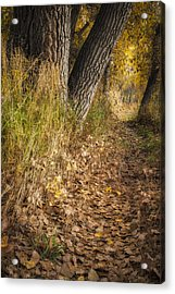 The Fall Way Home Acrylic Print by Michael Van Beber