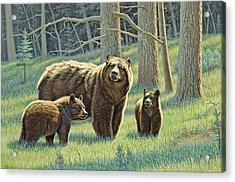 The Family - Black Bears Acrylic Print by Paul Krapf
