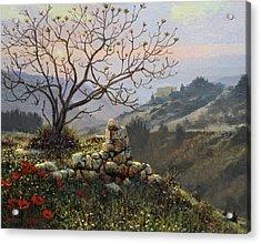 The Fig Tree   Mt Carmel Acrylic Print by Graham Braddock