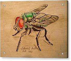 The Fly Acrylic Print by Fladelita Messerli-