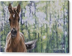 The Frilly Filly Acrylic Print by Joni Beinborn