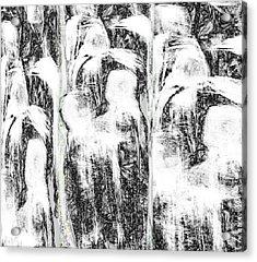 The Gathering Acrylic Print by Ruth Clotworthy