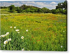 The Glory Of Spring Acrylic Print by Lynn Bauer