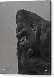 The Gorilla Acrylic Print by Ernie Echols