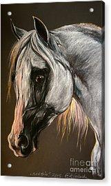 The Grey Arabian Horse Acrylic Print by Angel  Tarantella
