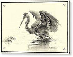 The Harpy Acrylic Print by John Williams