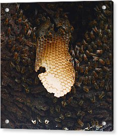 The Hive  Acrylic Print by Shawn Marlow