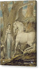 The Horse Acrylic Print by William Blake