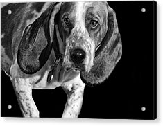 The Hound Acrylic Print by Camille Lopez