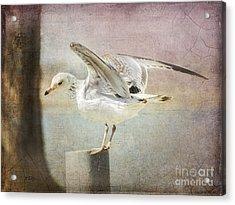 The Landing Acrylic Print by Betty LaRue