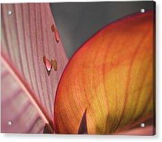 The Leaf No. 4 Acrylic Print by Richard Cummings