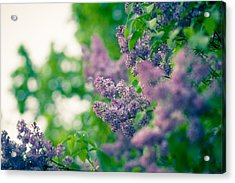 The Lilac Acrylic Print by Andreas Levi