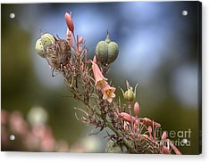 The Little Things In Life Acrylic Print by Douglas Barnard