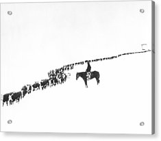 The Long Long Line Acrylic Print by Underwood Archives  Charles Belden