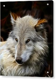The Look Acrylic Print by Steve McKinzie