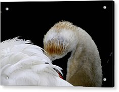 The Look Acrylic Print by Terry Cosgrave