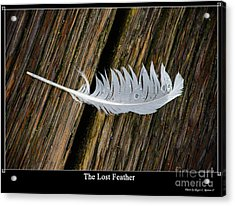 The Lost Feather Acrylic Print by Tikvah's Hope