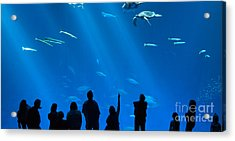 The Magnificent Open Sea Exhibit At The Monterey Bay Aquarium. Acrylic Print by Jamie Pham