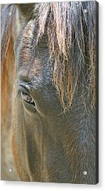 The Mane Eye Acrylic Print by Bruce Gourley