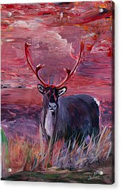 The Mighty Moose Mongoose Reindeer Elk Rentier Caribou Acrylic Print by M Bleichner