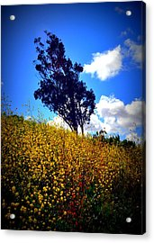 The Mustard Hillside Acrylic Print by Lisa Holland-Gillem