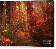 The Mystic Forest Acrylic Print by Tara Turner