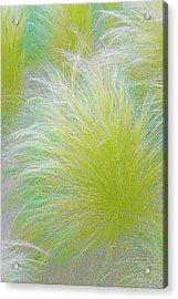 The Nature Of Grass   Acrylic Print by Ben and Raisa Gertsberg