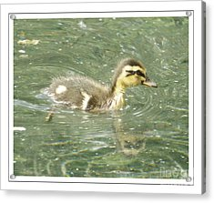 The New Addition Acrylic Print by Sara  Raber