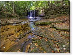 The New Fall  Acrylic Print by Darren Wilkes