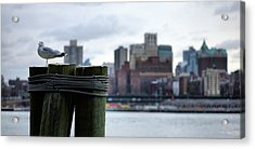 The New Yorker  Acrylic Print by JC Findley