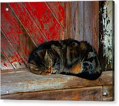The Old Mill Cat Acrylic Print by Julie Dant