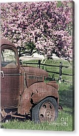 The Old Truck And The Crab Apple Acrylic Print by Edward Fielding