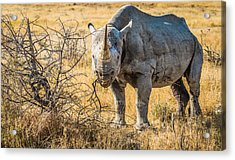 The Old Warrior - Rhinoceros Photograph Acrylic Print by Duane Miller