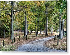 The Path Acrylic Print by Carolyn Ricks