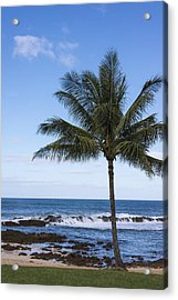 The Perfect Palm Tree - Sunset Beach Oahu Hawaii Acrylic Print by Brian Harig