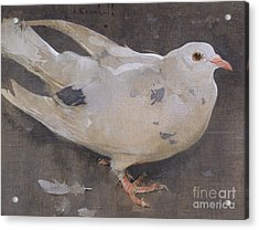 The Pigeon Acrylic Print by Joseph Crawhall