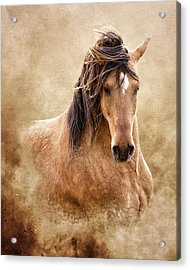 The Proud Acrylic Print by Ron  McGinnis