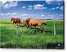 The Race Acrylic Print by Terry Reynoldson