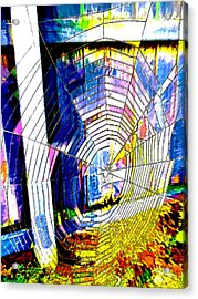 The Refracted Cobweb Acrylic Print by Steve Taylor