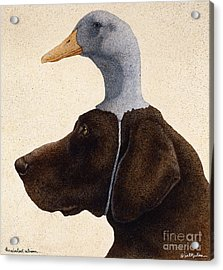 The Reluctant Retriever... Acrylic Print by Will Bullas