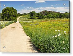 The Road Home Acrylic Print by Lynn Bauer