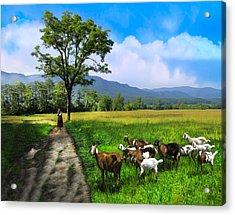 The Shepherdess Acrylic Print by Debra and Dave Vanderlaan