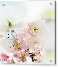 The Silent World Of A Butterfly Acrylic Print by Morag Bates