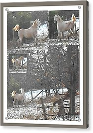 The Stallion Lives In The Country Acrylic Print by Patricia Keller