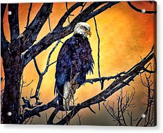 The Staring Eagle Acrylic Print by Gary Smith