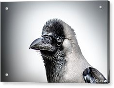 The Story Of Crow Acrylic Print by Gautam Gupta