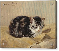 The Tabby Acrylic Print by Henriette Ronner-Knip